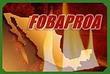 Se funda el Fondo Bancario de Protección al Ahorro (Fobaproa).