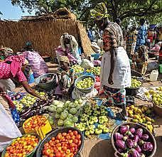 Se presenta el Plan Agrícola de Emergencia