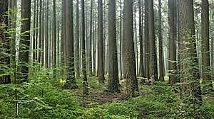 Lei de Florestas e Fauna bravia