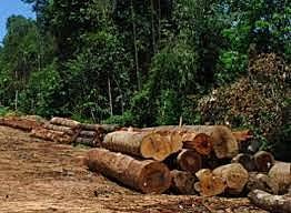 Protecção, conservação e utilização sustentável dos recursos florestais e faunísticos