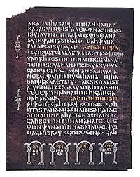 Biskop wulfia