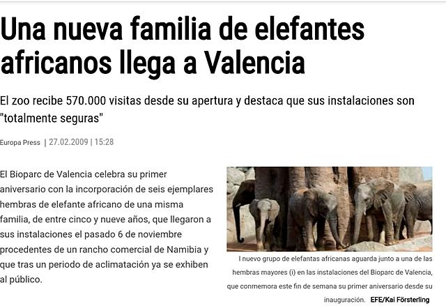 Elefants africans a València