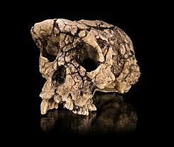 Toumai - 7 millones de años