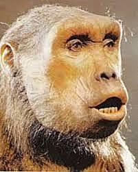 Orrorin Tugenensis - 6 millones de años