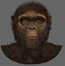 Ardipithecus Kadabba - 5,8 millones de años
