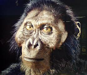 Paranthropus Aethiopicus - 2,5 millones de años
