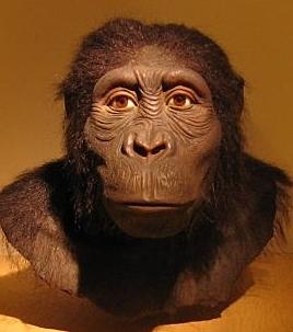 Australopithecus anamensis.