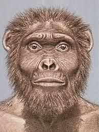 Australopithecus Garhi - 2,5 millones de años