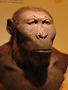 Paranthropus Robustus - 1,9 millones de años