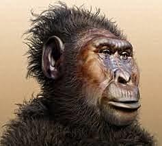 Paranthropus Boisei - 1,8 millones de años