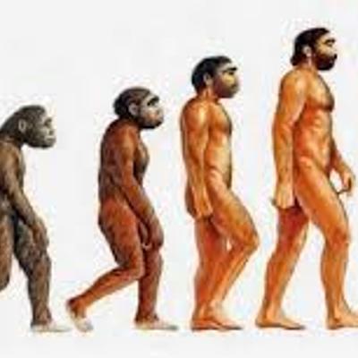 Evolucion De La Especie Humana timeline