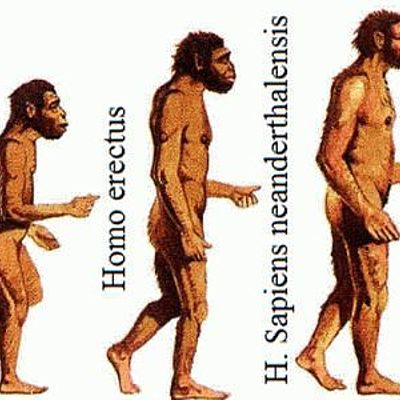 especies de hominidos timeline