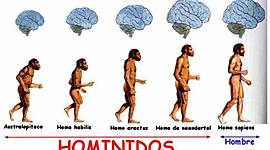 Especies Homínidas Hecho por Joan Sebastian Sanchez Rojas 902 timeline