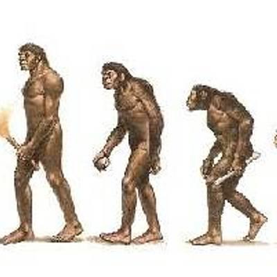 Evolución de la Especie Humana timeline