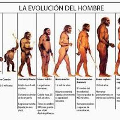 evolucion de las especies  timeline