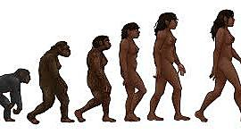 evolucion de la especie humana   miguel sanchez 902 timeline