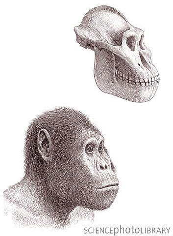 Australopithecus garhi hace millosnes de años