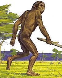homo rudolfensis hace 1.6 millones de años