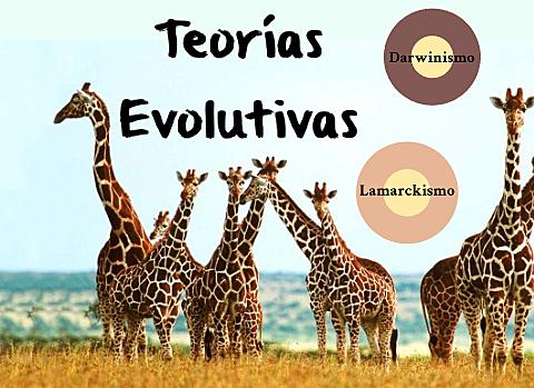CONCEPTOS DE EVOLUCIÓN.