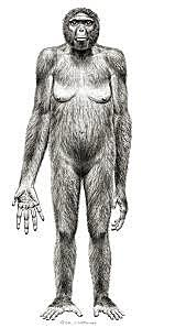 aparición del Ardipithecus kadaba