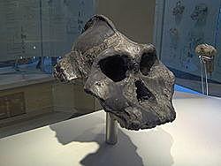 aparición del Paranthropus aethiopicus
