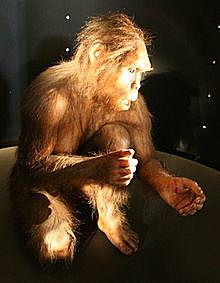aparición del Homo habilis