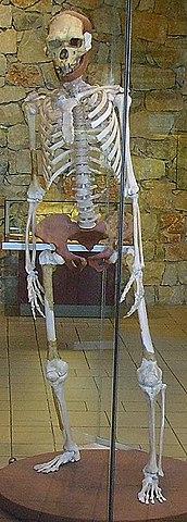 aparición del Homo erectus