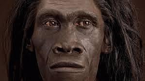 Homo erectus