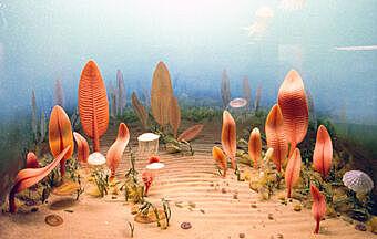 Proterozoico. Hace 570 m.a