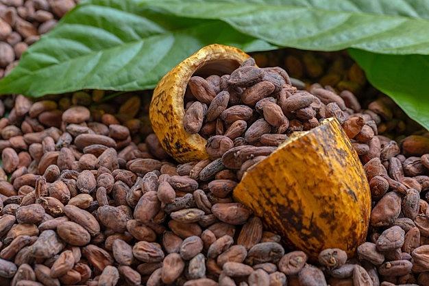 La llegada del chocolate a Europa (Cambio significativo)