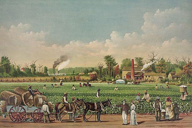 Cultivo de algodón en EU