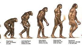 LÍNEA EVOLUTIVA DE LA ESPECIE HUMANA timeline