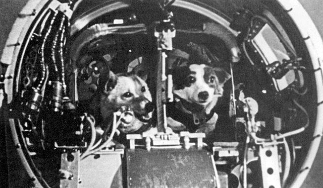 Korabl-Sputnik 2/ Sputnik 5