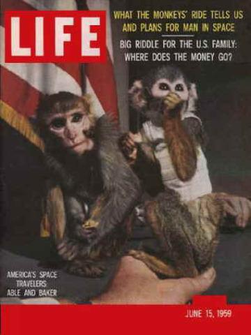 Första aporna i rymden