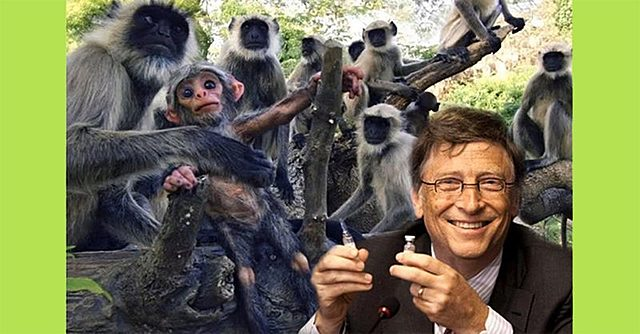 Another Gates Vaccine Bites the Dust—Sick Monkeys Everywhere!