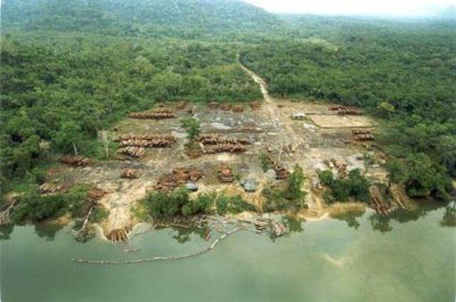 Restrição de desmatamento em florestas