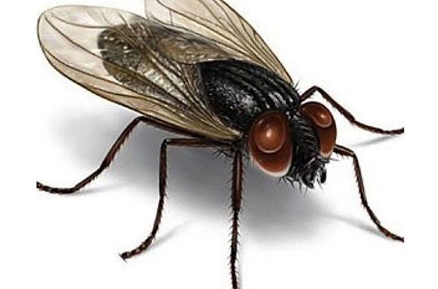 La mosca que hizo historia
