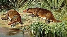 PERIODO PALEOCENO Paleoceno 65 a 55 m.a ERA CENOZOICA