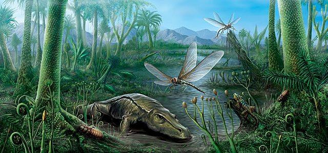 Periodo carbonifero 350 m.a. - 286 m.a.