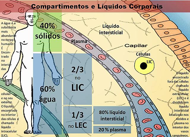 Compartimentos e líquidos corporais