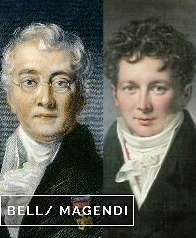 Bell / Magendi