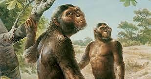 El hombre Australopiteco, evidencias de los primeros cuidados.