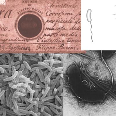 Cronología del cólera timeline
