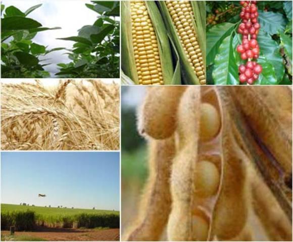 Investigación Industrial y Agrícola