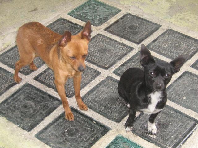 mis perritos