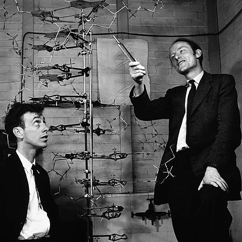 Francis Crick (1916 - 2004) . James Watson (1928-presente), Edwin Chargaff (1905- 2002) y Maurice Wilkins (1916-2004)