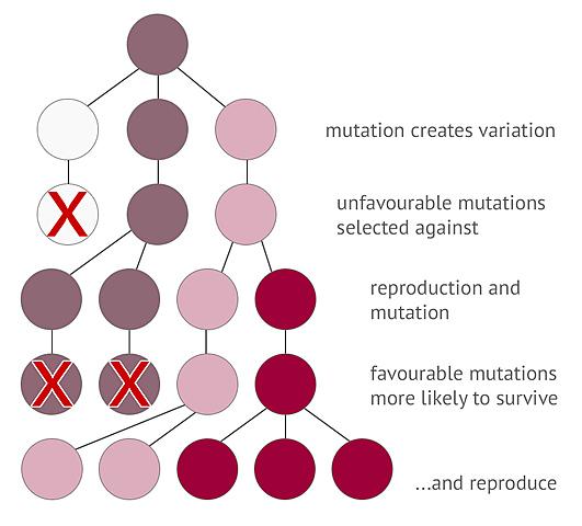 Biologic evolution