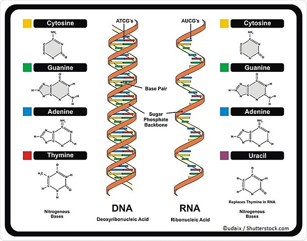 World of RNA