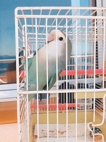 Tinc el meu primer ocell!