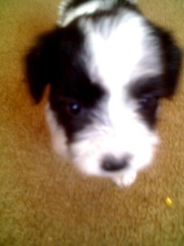 muere mi perrita favorita llamada laiza!!